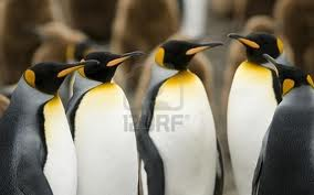 These Emperors are pretty bad-ass, penguin wise.