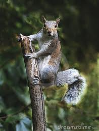 What'd I do?  Huh?  Got any nuts?