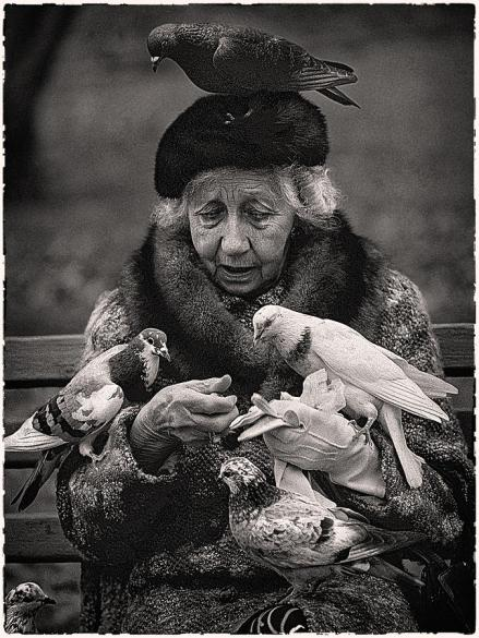 bird-lady-of-central-park-hal-norman-k