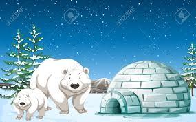polar bear igloo