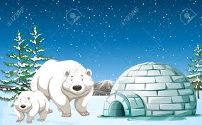 polar bear igloo